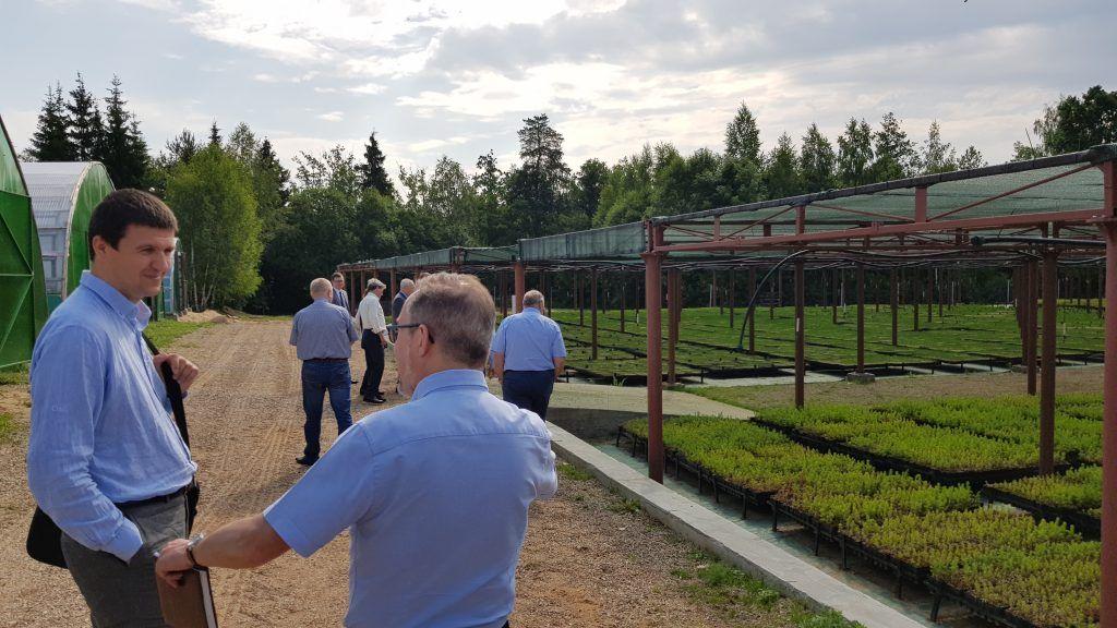 Borisov sawmill forests nursery farm