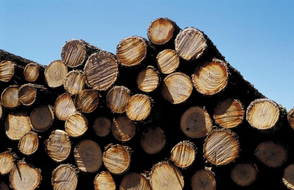 Challenging softwood market for remainder of 2020