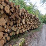 Defra prepares draft statutory instruments on post-Brexit regime for Timber Products and FLEGT