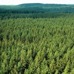 Sweden: Notified area of final felling increased sharply after the forest fires of the summer