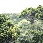 Chatham House to hold 28th Global Forum on Forest Governance on 8-9 November 2018