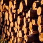 """EU Timber Regulation Report: """"Continuous efforts are needed to ensure uniform and effective application of the EUTR,"""" says EC"""