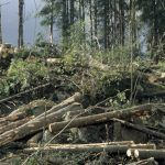 Swedish Forestry | Gross felling is expected to increase in 2018