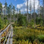 Sweden: Increased interest in notified area of final felling in December
