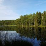 Sweden: Large increase in forest area protected