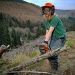 Carving out a career in forestry