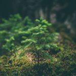 European forest-based industries work together on new vision for 2050