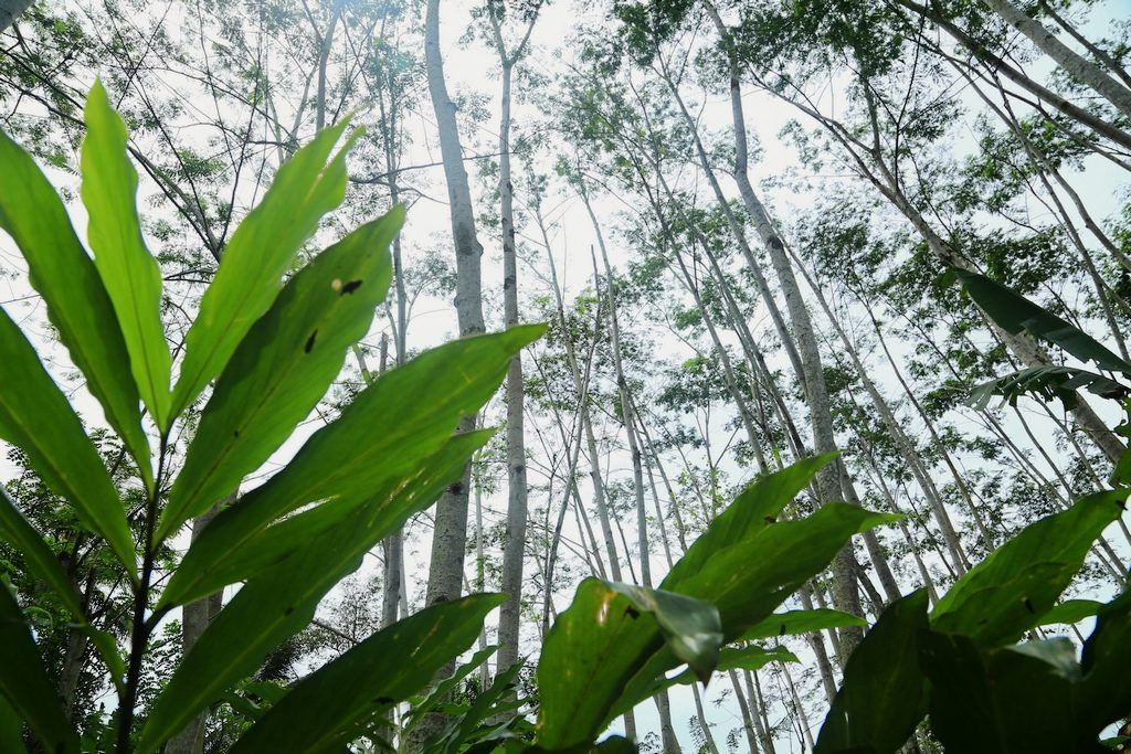 Exploring pathways to verified sustainable tropical timber