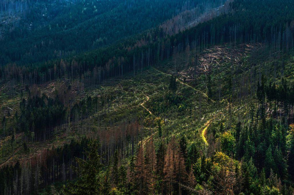 UK Government proposal on illegal deforestation