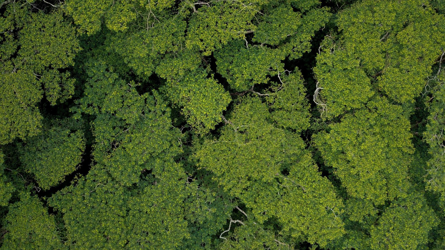 Aerial-of-tropical-trees (16 x 9) smaller