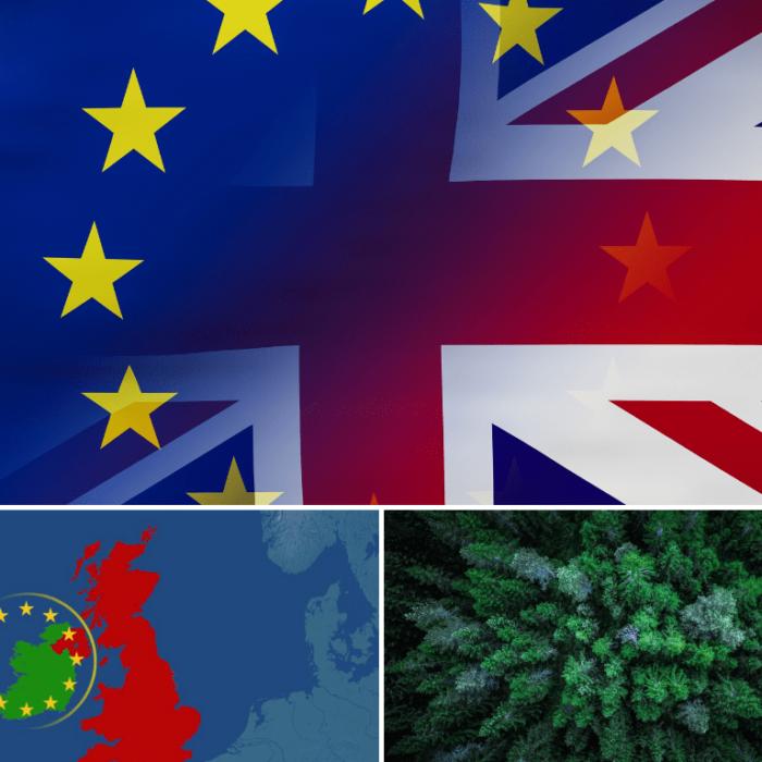 brexit, northern ireland, coniferous plywood