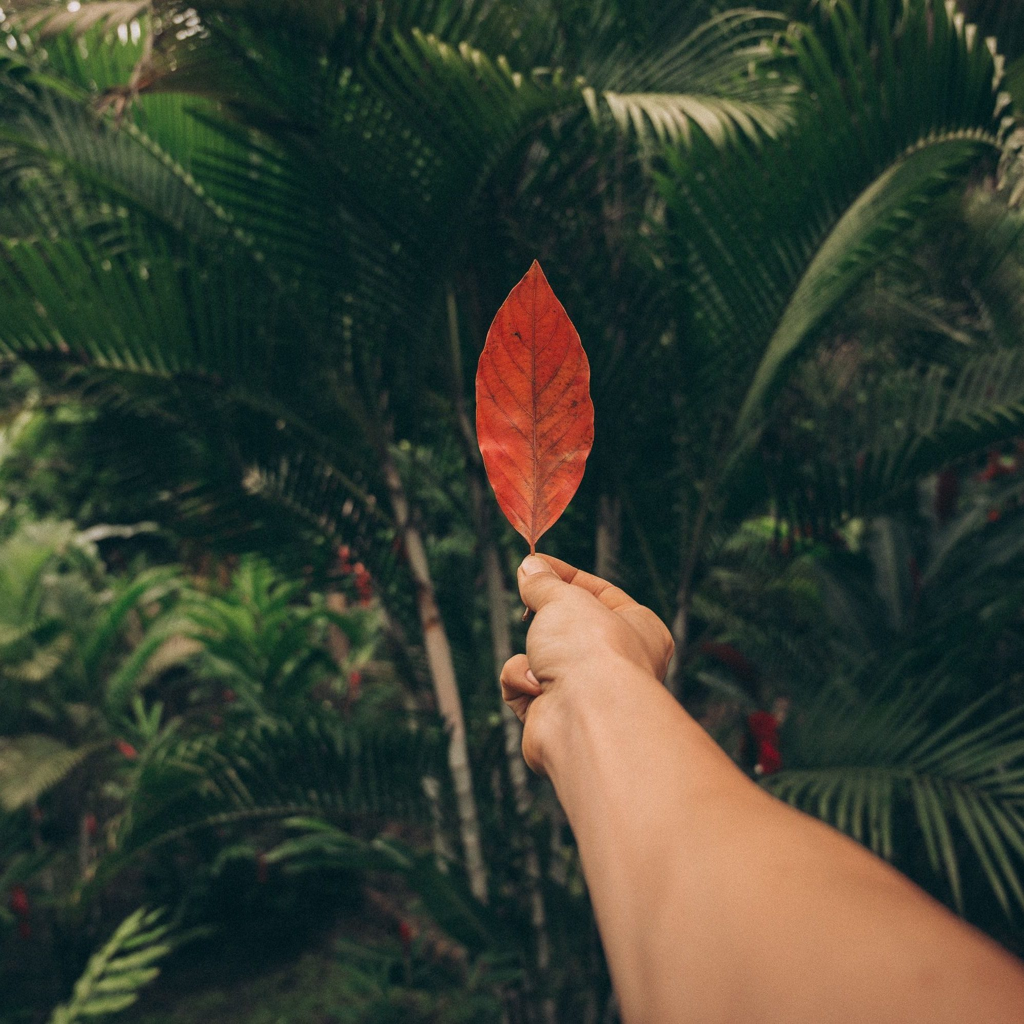 Tropical-Forest-Conscious_Design_Unsplash