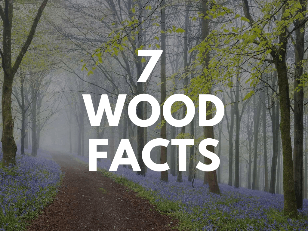 7 facts on how using more wood can restore our Earth