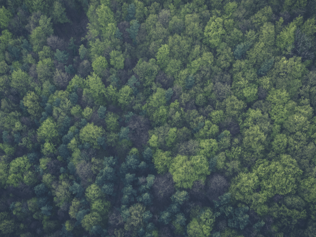 Sustainability, construction, and the future of timber