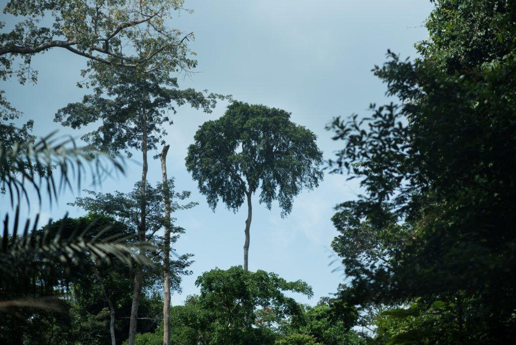 IMM webinar - Tropical Trade Trends and FLEGT Profile