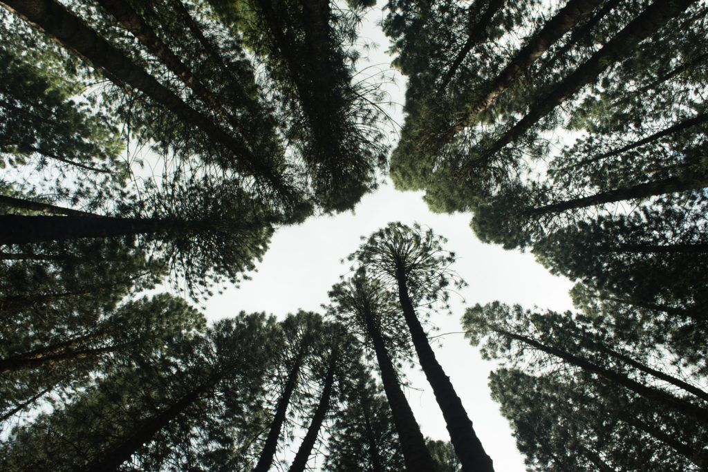 Climate Change and Biodiversity Loss - solve together or not at all