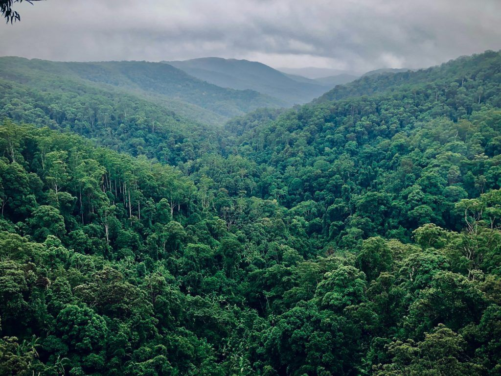 FLEGT IMM: Governance essential for FLEGT & sustainable forestry
