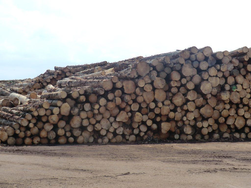 Timber imports continue strong market recovery